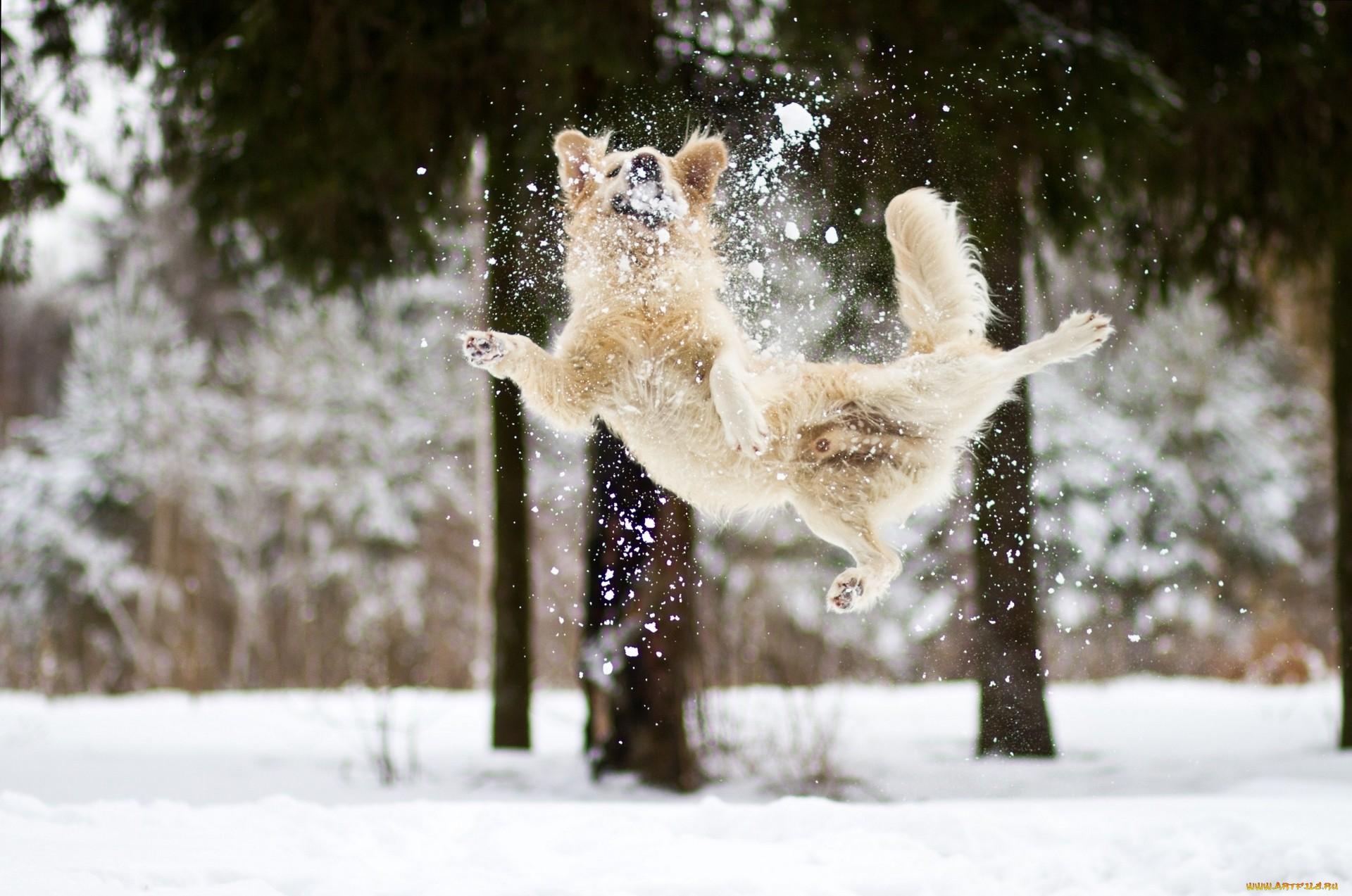 ура снег картинки карьера