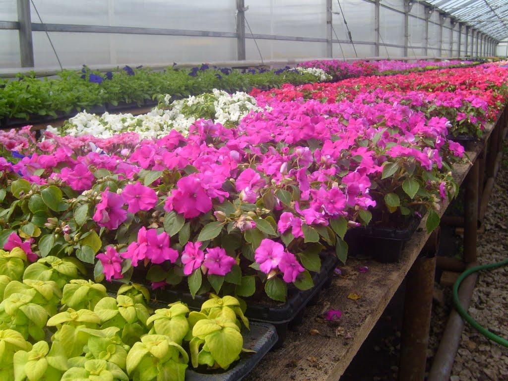 Питомник растений, купить рассаду цветов оптом в Москве