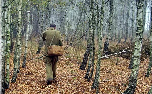 Грибники обнаружили труп мужчины в лесном массиве около улицы Курчатова