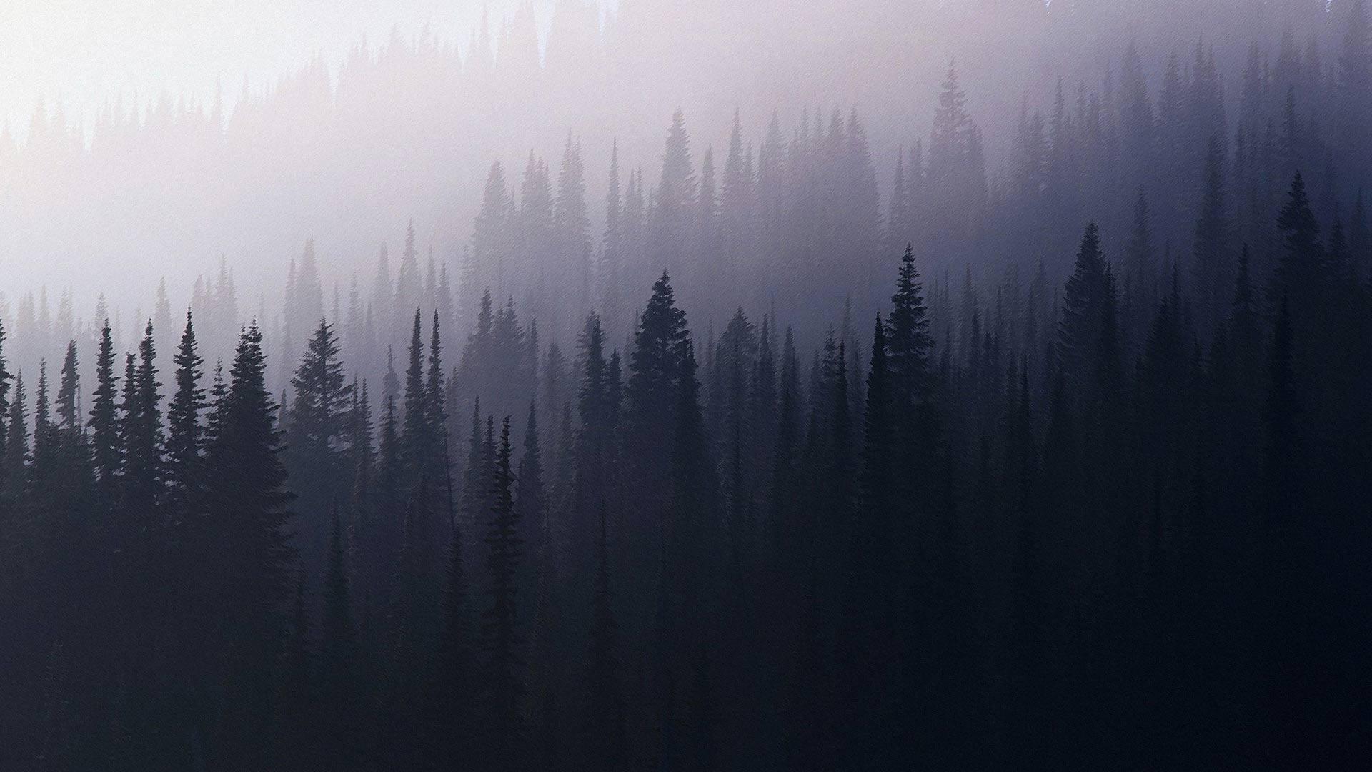 Стихи про туман  chtotakoelyubovnet