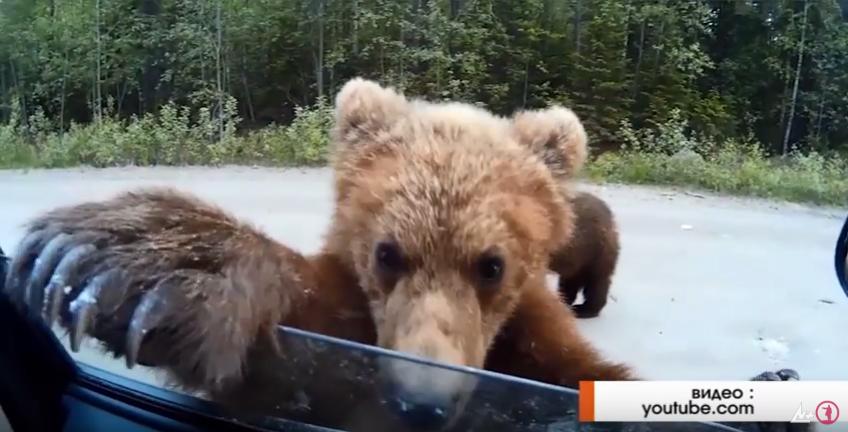 Картинка с медведями на обои фотографиями