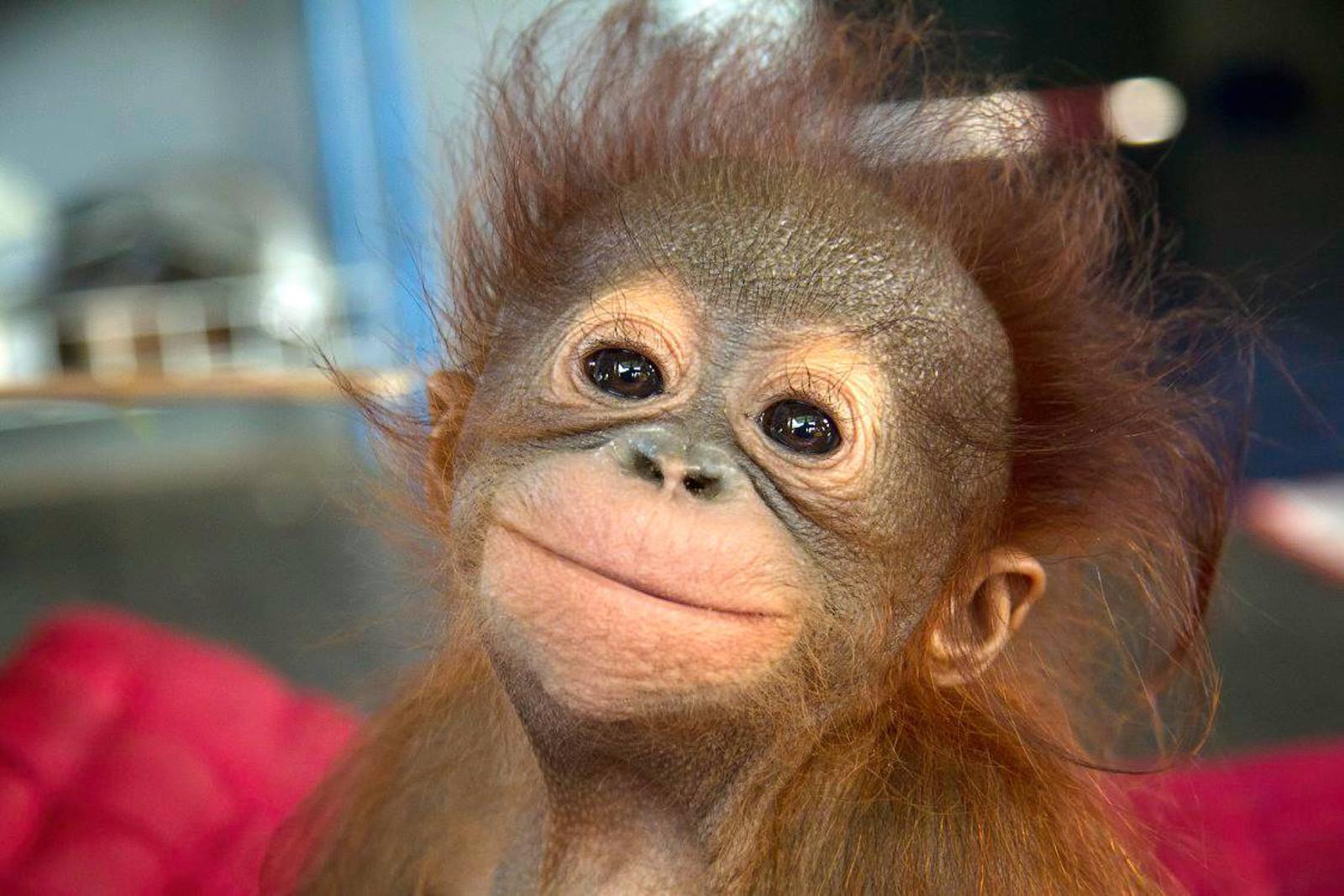 Надписью, доброе утро любимый картинки красивые с надписью прикольные с шимпанзе