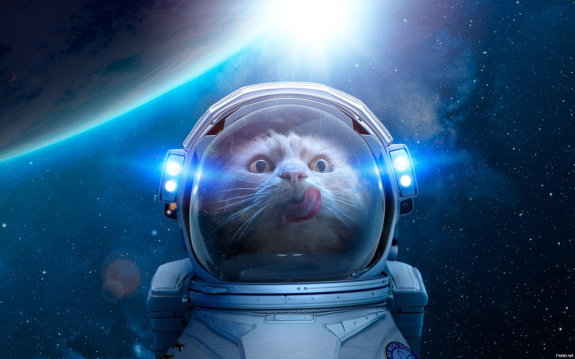 Картинки смешные космоса