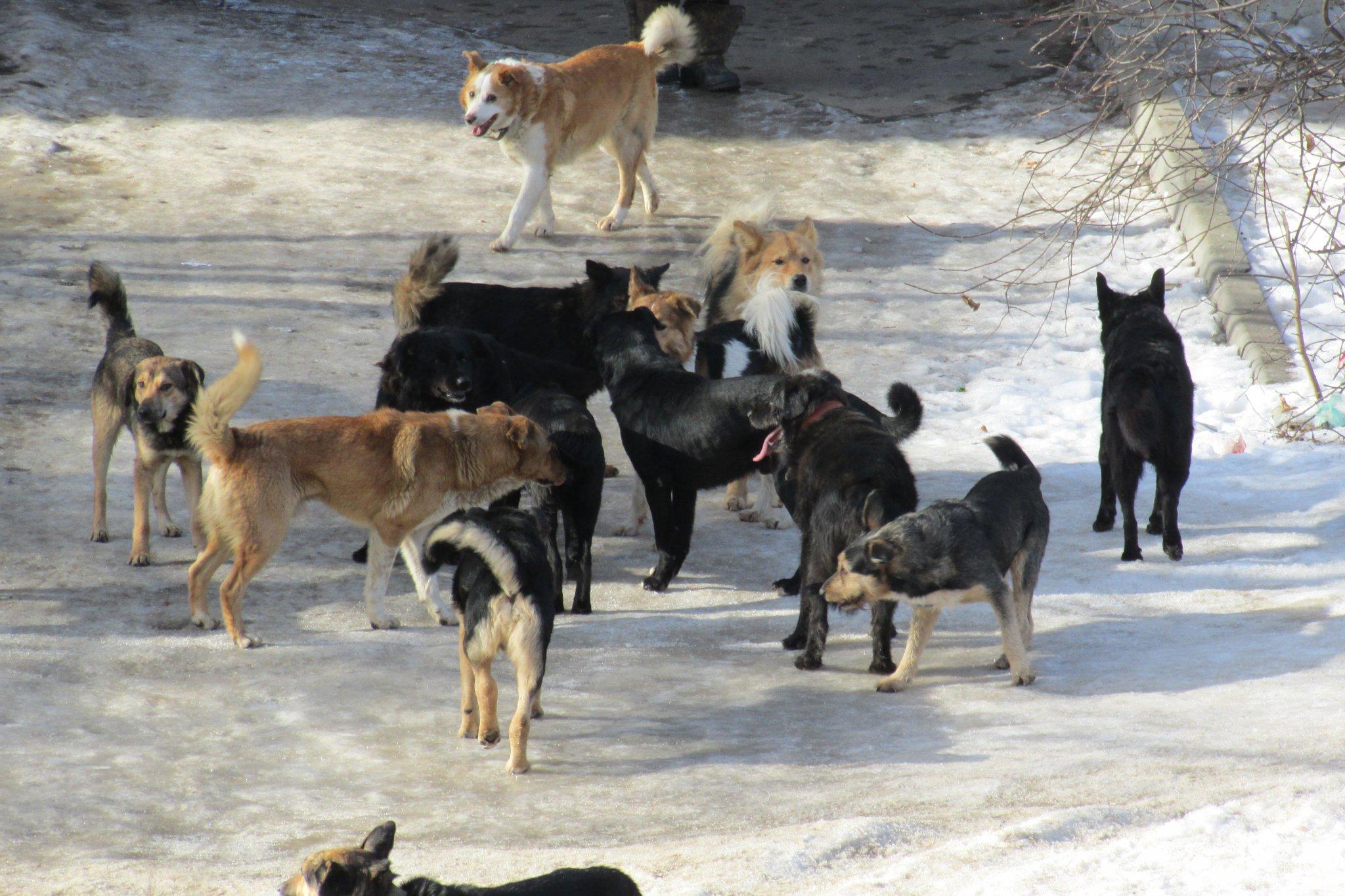 стая бродячих собак картинки сути, это целый