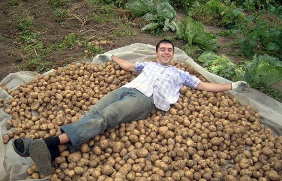 веселые картинки про копание картошки современной фото студии