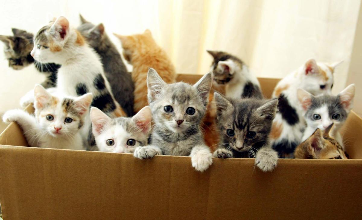 Лотоса, картинки много кошек