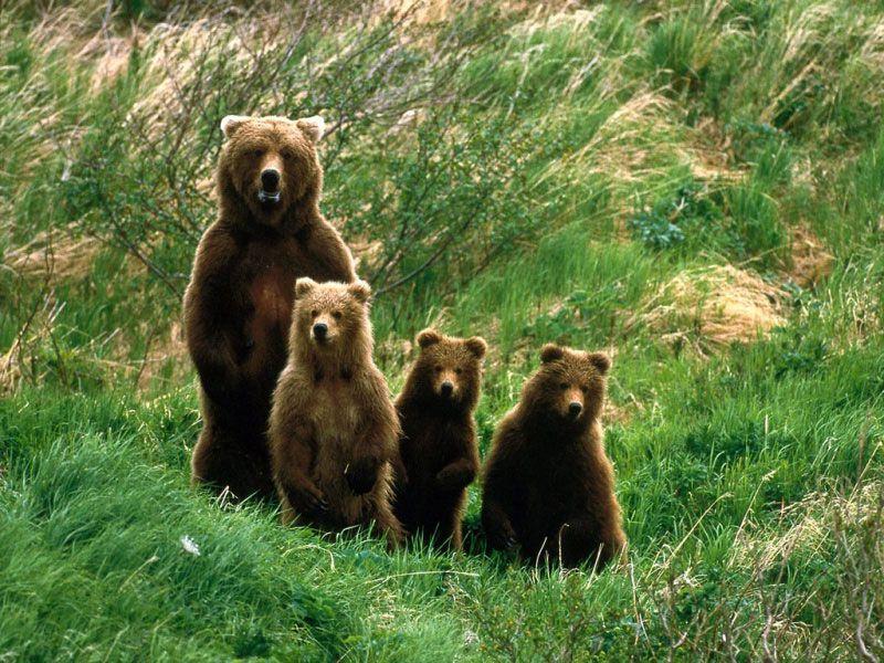 Медведь рисунок сидит
