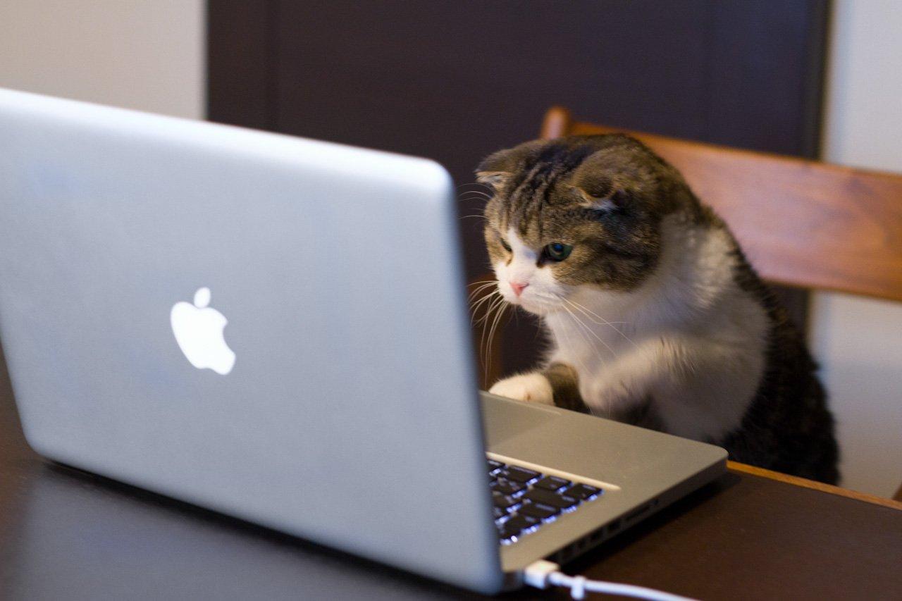 Смешная картинка с ноутбуком, днем рождения