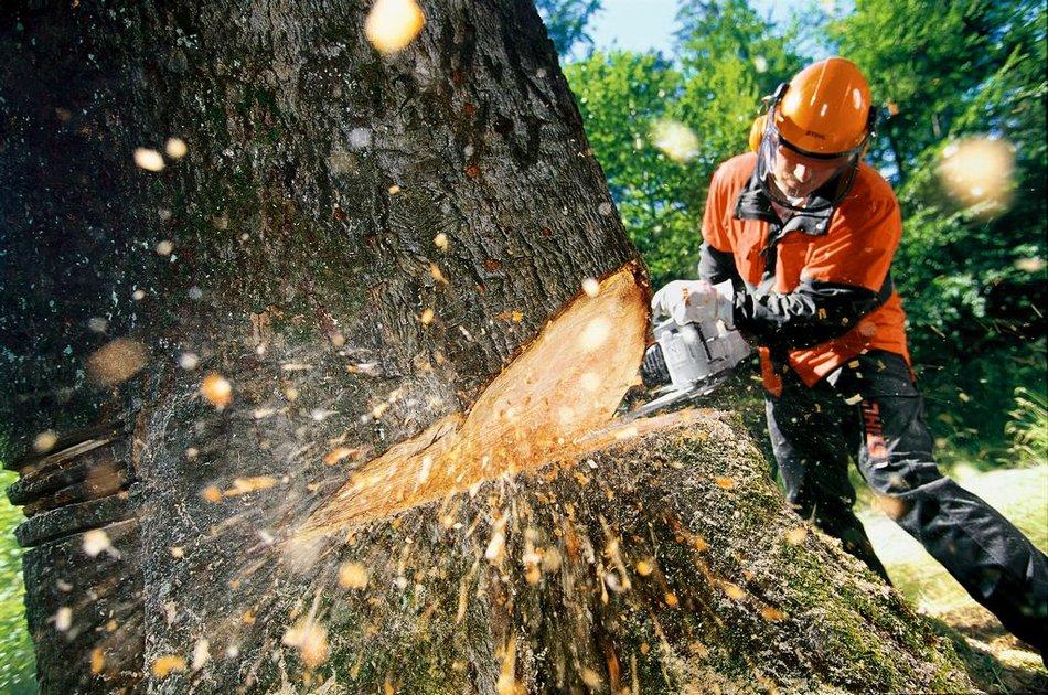 как европейскую, картинки пилят лес бумажном