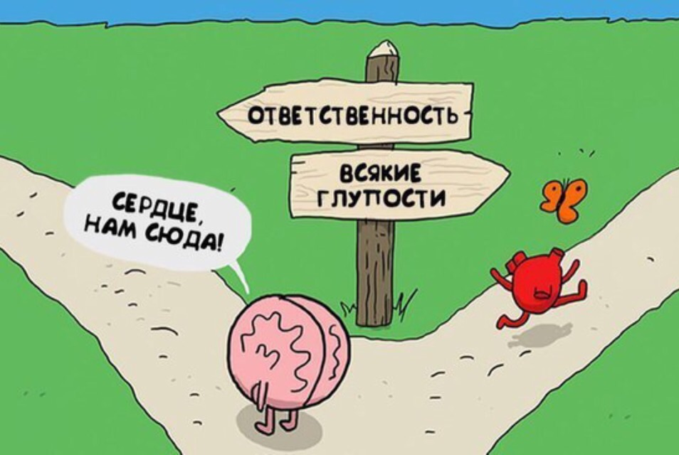 Смешные фото, мозг и сердце смешные картинки