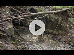 Откуда говно течет по лесу в Онежское озеро