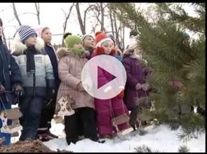 высадка деревьев зимой
