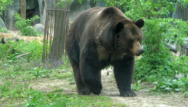 А как дела с медведями обстоят в Карелии? [Архив] - uazbuka ru