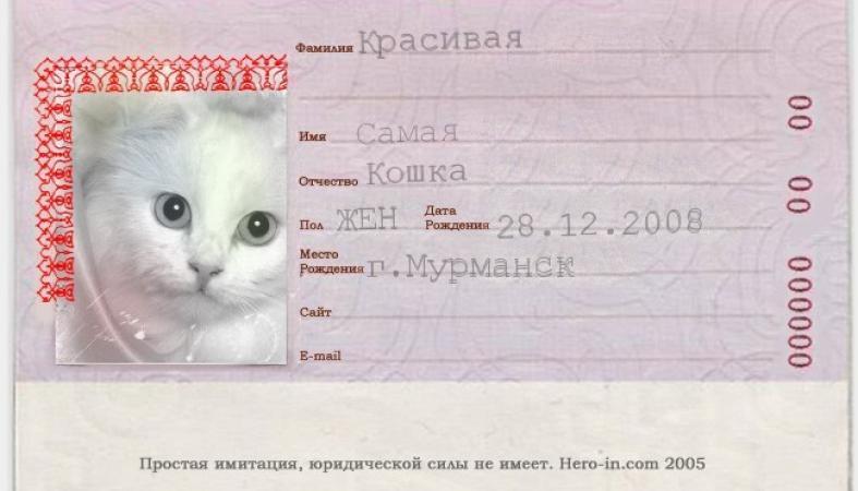 Власти Петрозаводска предлагают ввести паспорта для домашних животных