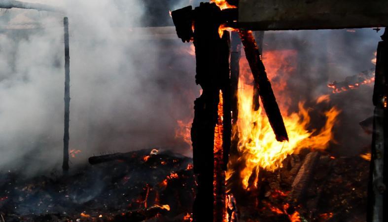 Поджигатели обрекли на смерть кроликов и двухмесячного котенка