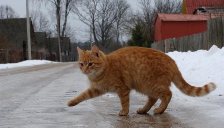Страшный гололед образовался на дорогах Петрозаводска
