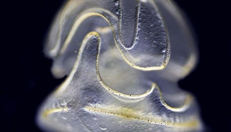Учеными найдено необычное животное сголовой ибез тела