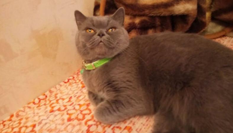 Житель россии решил реализовать предотвращающую измены кошку за15 млн руб.