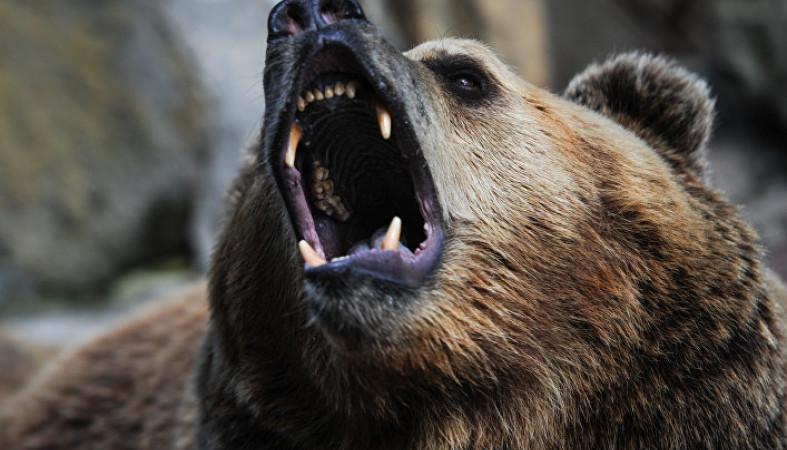 Медведь покусал женщину-волонтера взоокомплексе вКарелии