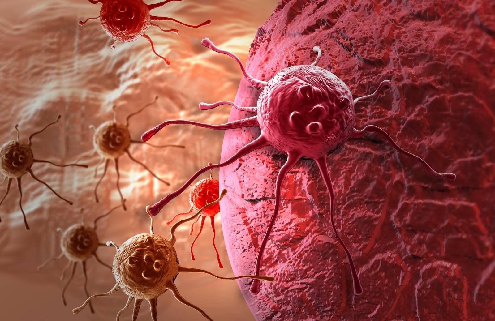 Ученые из Новосибирска тестируют новый препарат, способный убивать рак
