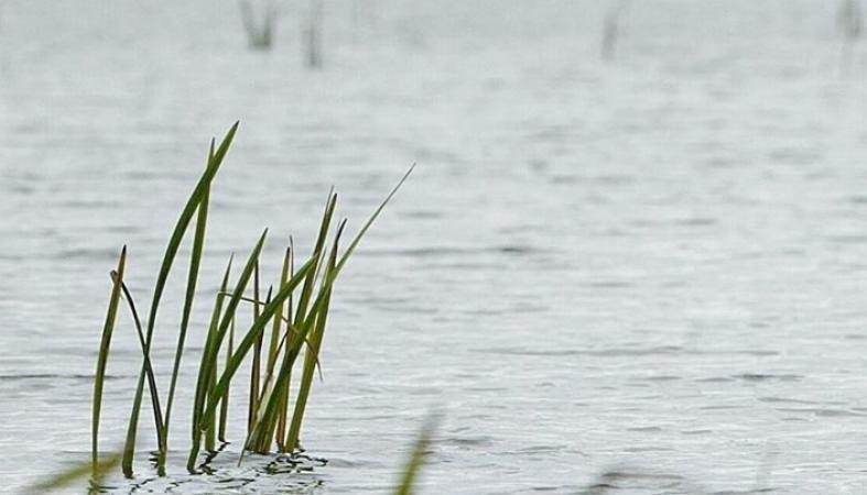 Пациент психбольницы в Матросах сбежал от сестры и утонул в реке