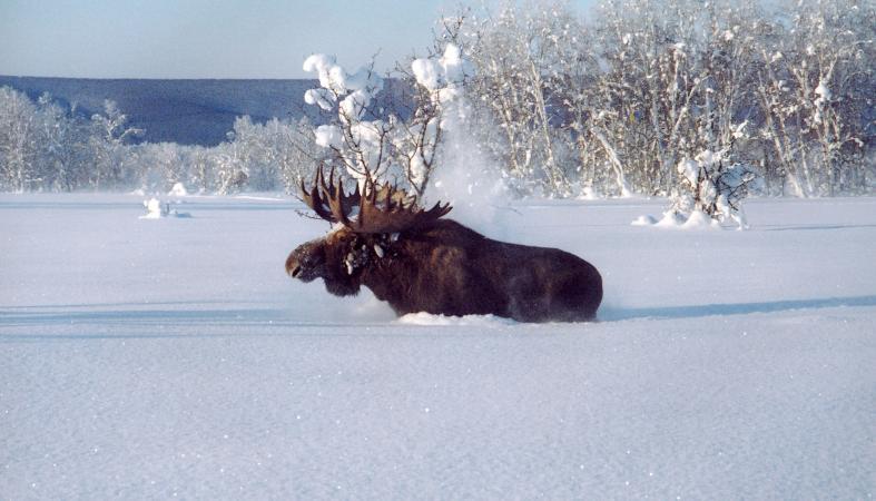 Дополнительные квоты на охоту будут выданы в Карелии