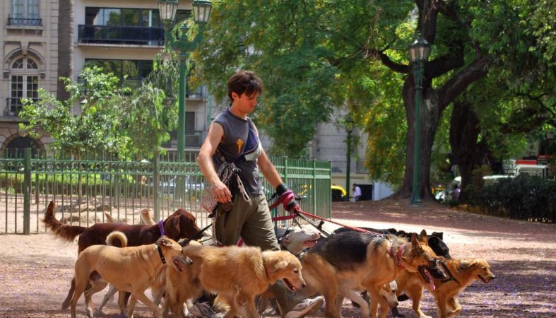 Мэрия Петрозаводска сделала важное объявление для владельцев домашних животных