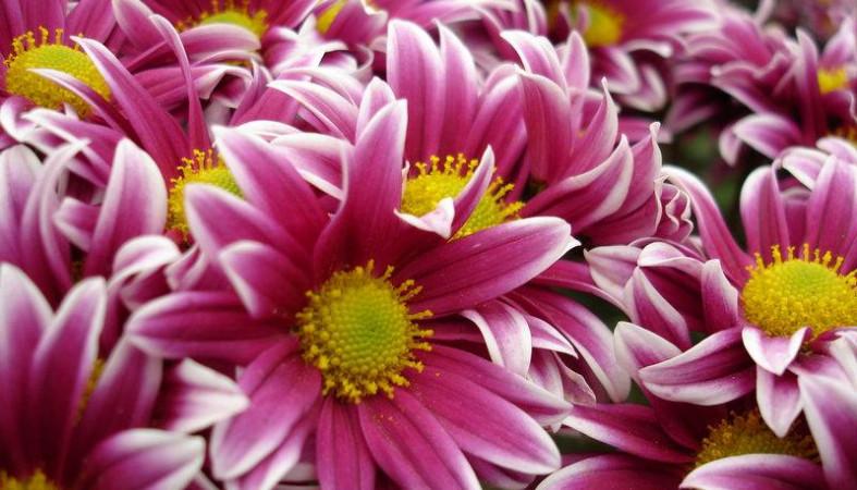 Накануне 8Марта Россельхознадзор сжег 5 тыс. цветов