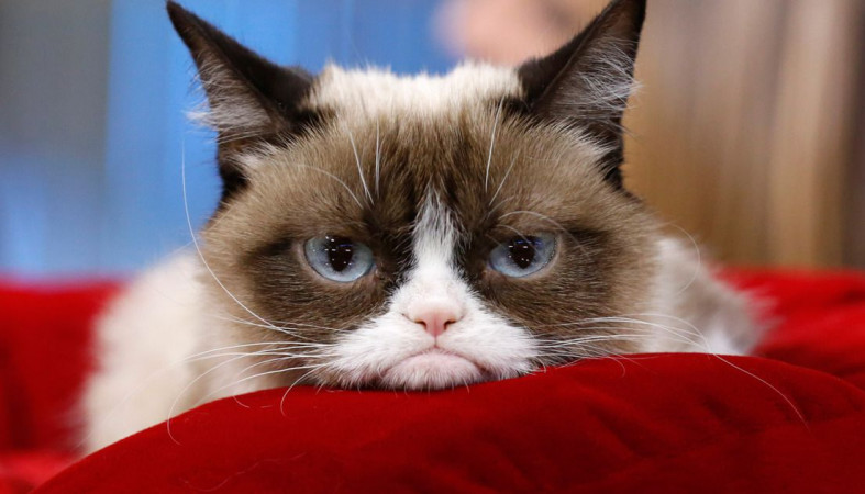 Скончалась самая известная кошка-мем Grumpy Cat
