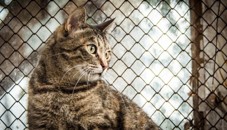 Стих о бездомных кошек