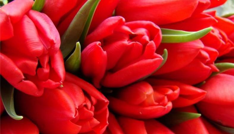 Купить цветы в петрозаводске дешево, салон свадебные букеты спб цветоптторг
