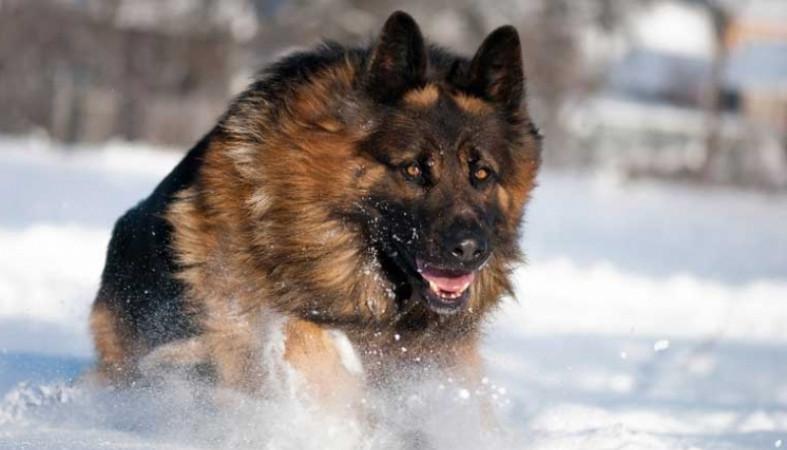 Вцентральной части Москвы собаки загрызли вдову известного советского диктора и артиста