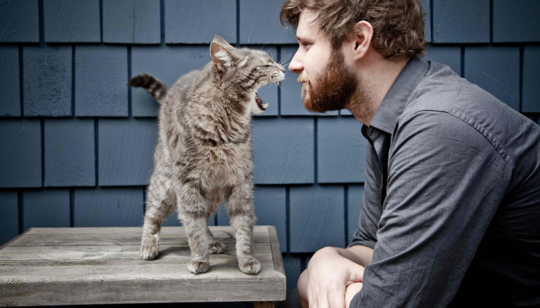 Коты рассказали, что посути любят влюдях