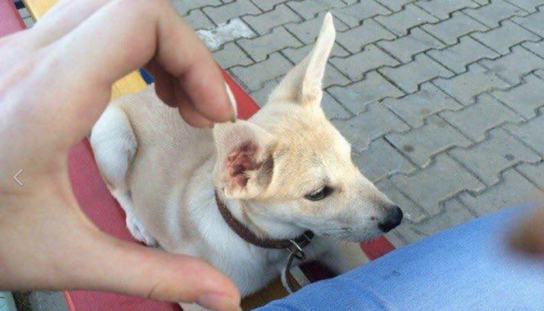 ВХабаровске милиция ищет живодеров, разместивших вглобальной сети фото издевательств над животными