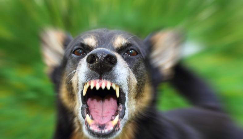 Оставленный без присмотра пес покусал ребёнка надетской площадке вЛахденпохье