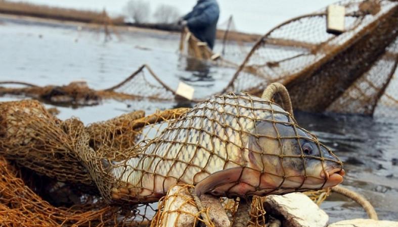 Браконьера из Петербурга поймали во время рыбалки на Ладожском ...