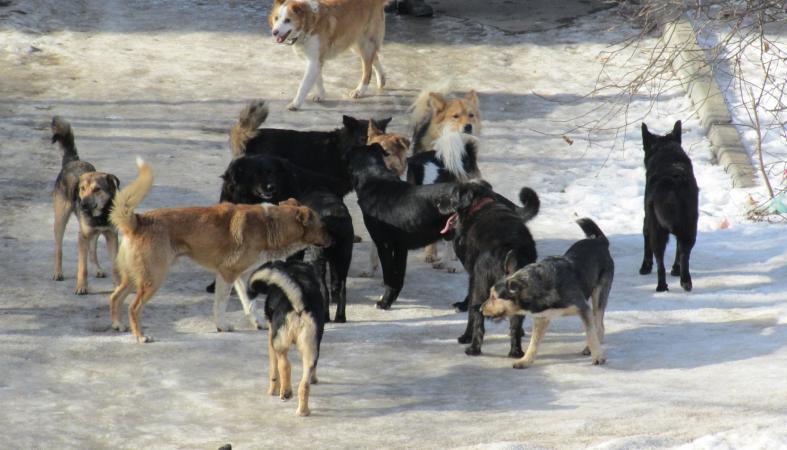 Названо пугающее число бездомных собак в Петрозаводске