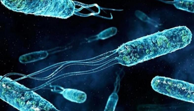 В Финляндии выявили второй случай заражения вирусом Зика