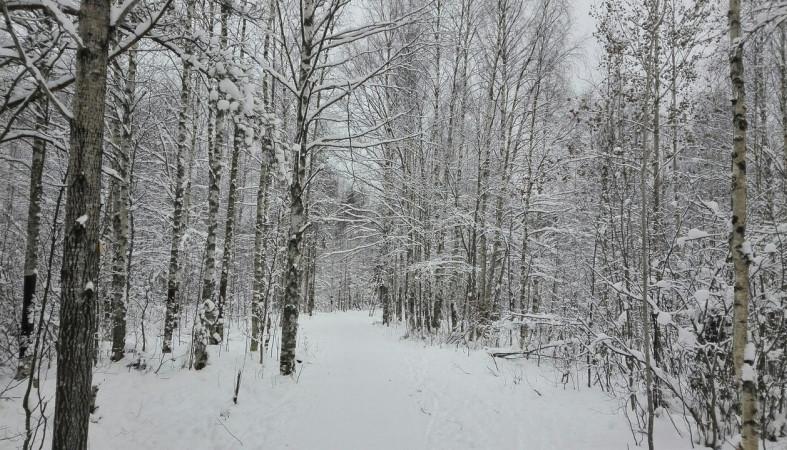 Свердловская область погода д