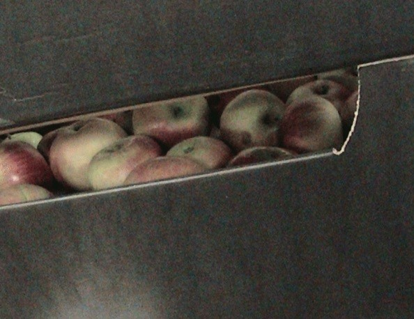 Под Пензой уничтожено 82 килограмма санкционных яблок
