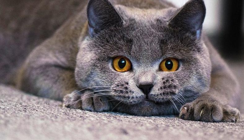 фото беспородных кошек