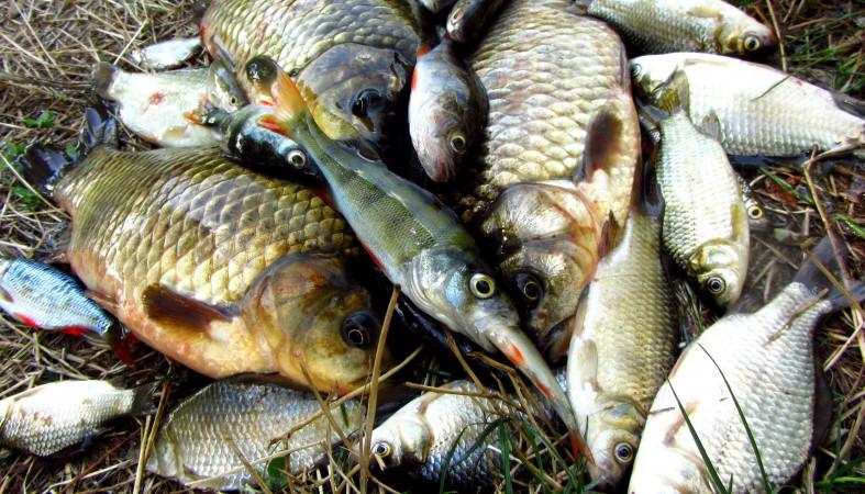Рискованная рыба вызвала эпидемию в Российской Федерации