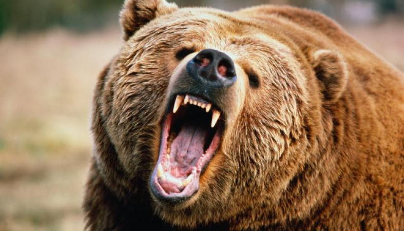 Re: Медведи в Карелии кто-нибудь имел дело - Skitalets ru - форумы
