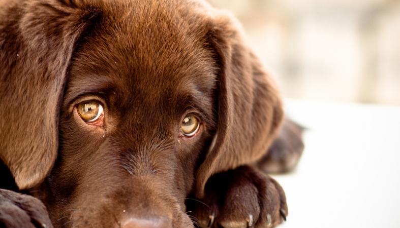 Гражданин Карелии досмерти замучил трехмесячного щенка