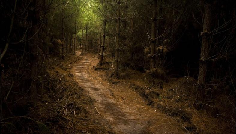 Житель Карелии избил и вывез в лес подростка