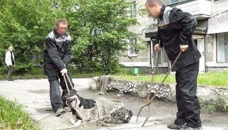 Незаконное умерщвление собак скоро начнется в Прионежском районе Карелии
