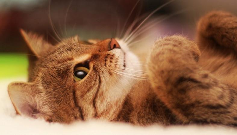 Вweb-сети появился сайт снепрерывным кошачьим мурлыканьем