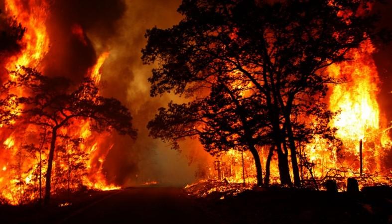 В Татарстане прогнозируются лесные пожары этим летом