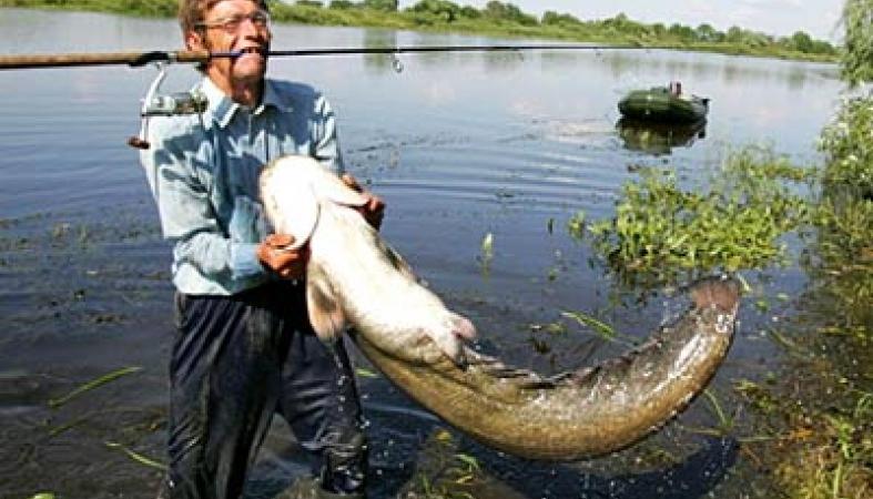 Жителям деревень на побережье Белого моря вернули право ловить ...