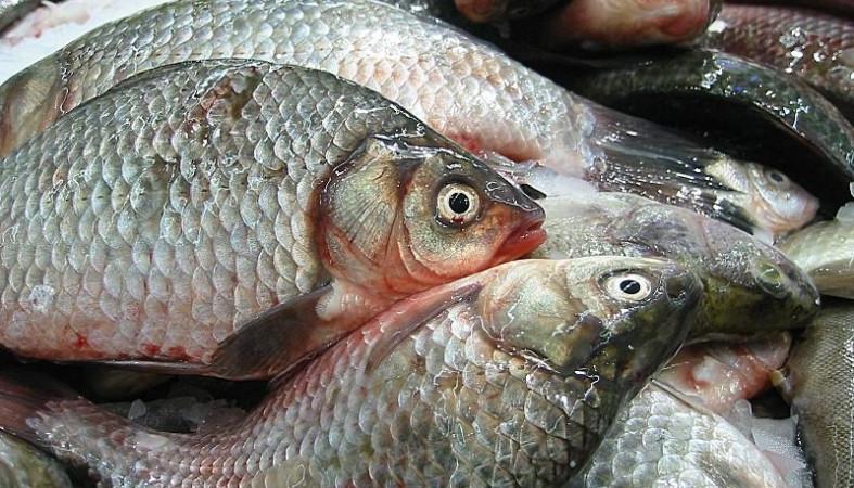 """Рыбоводное хозяйство """"Карелпродактс"""" планирует создание селекционно-генетического центра рыбоводства"""